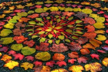 feuilles d'automne disposées en mandala